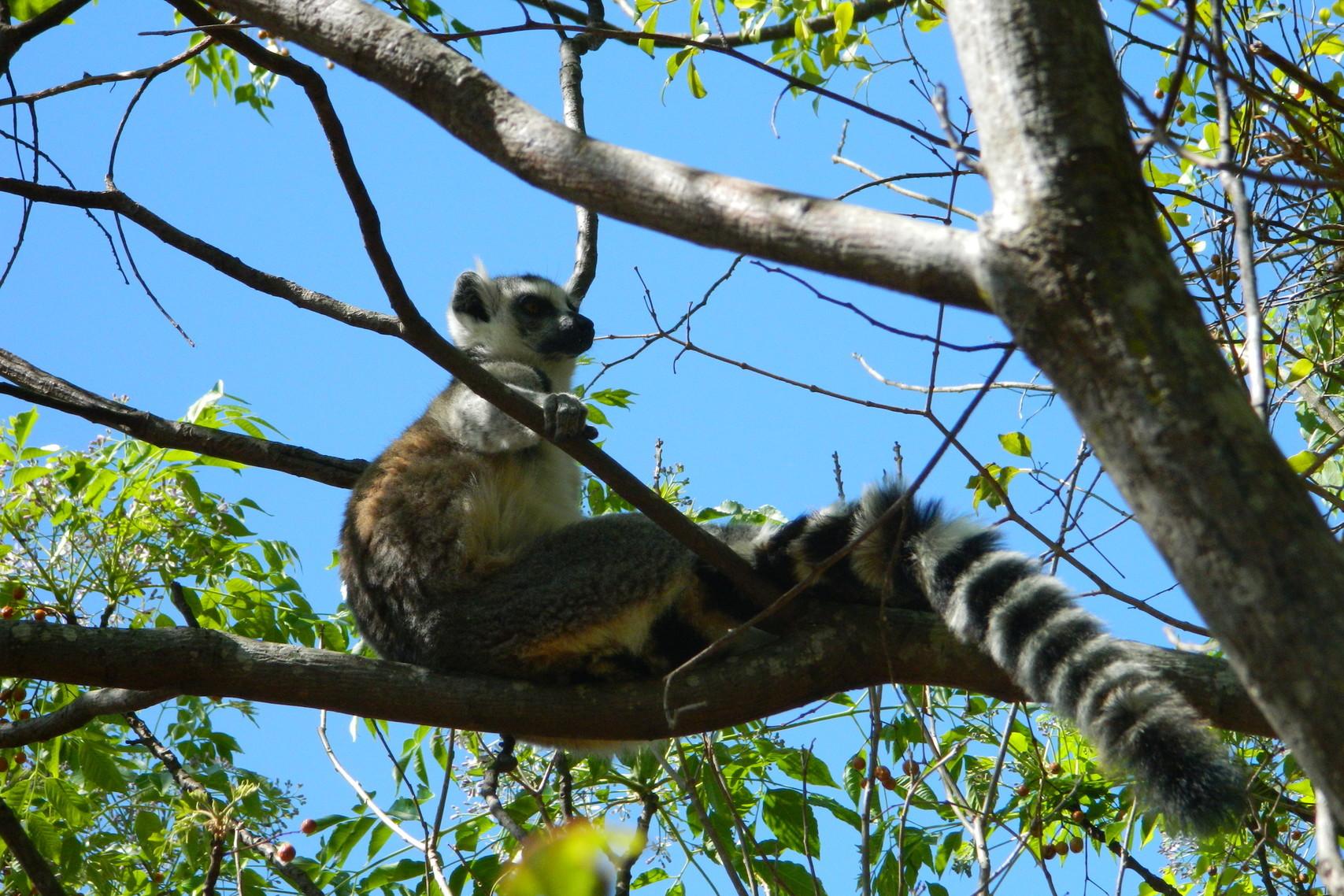 Leii din Kenya & lemurii din Madagascar