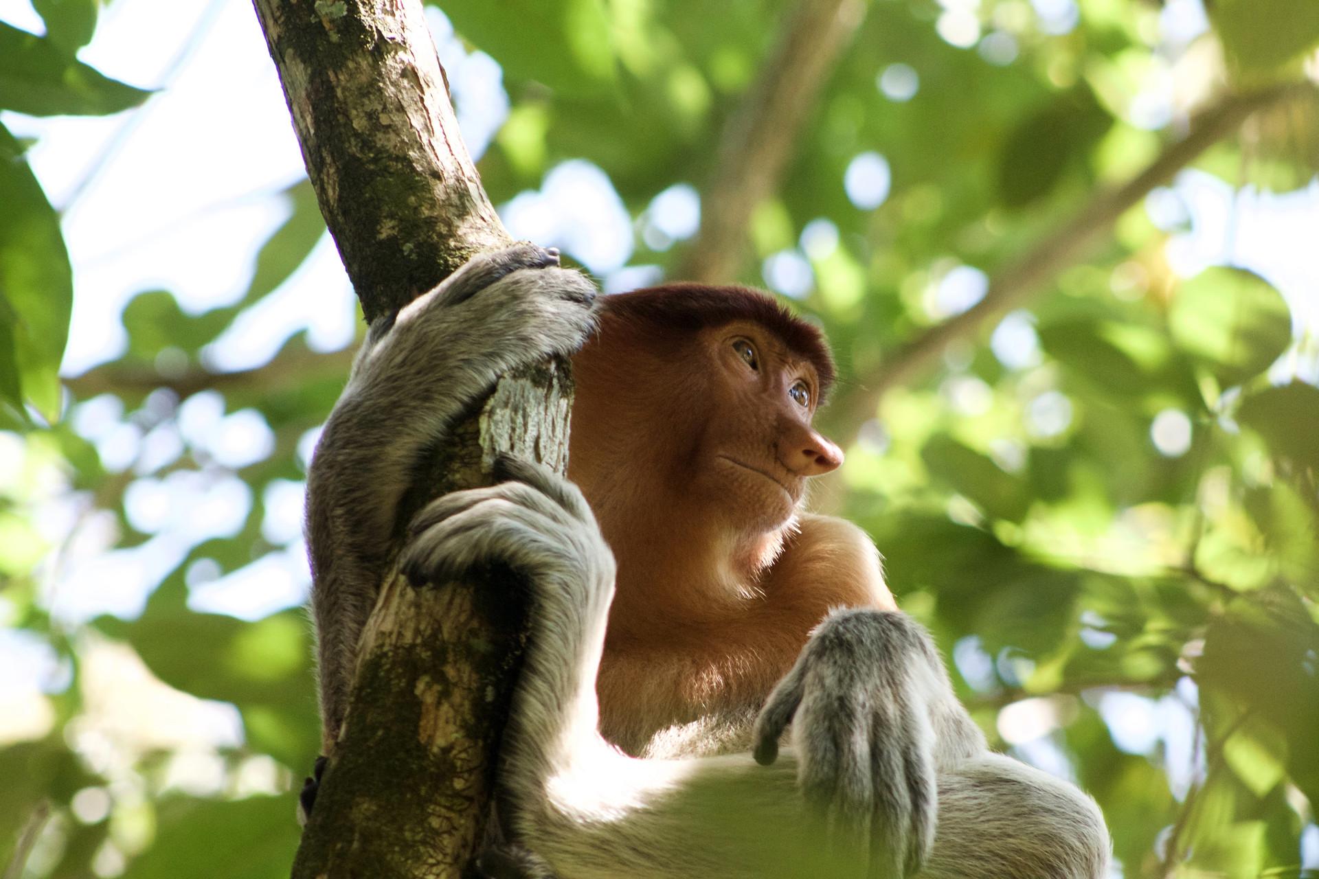 Highlights Borneo